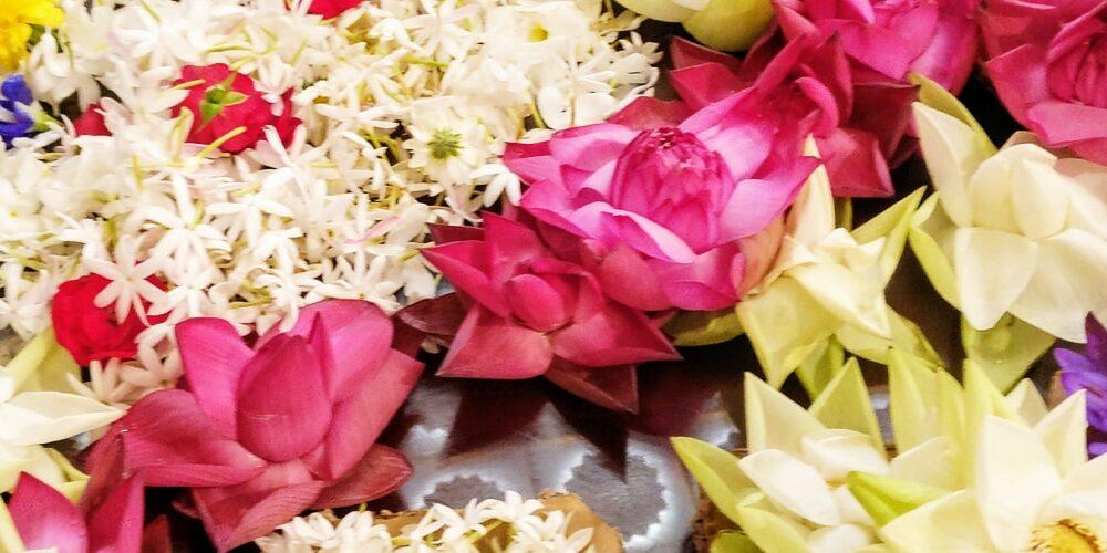 sejour sri lanka 1000x500 - Blog - Articles et Saveurs des Indes